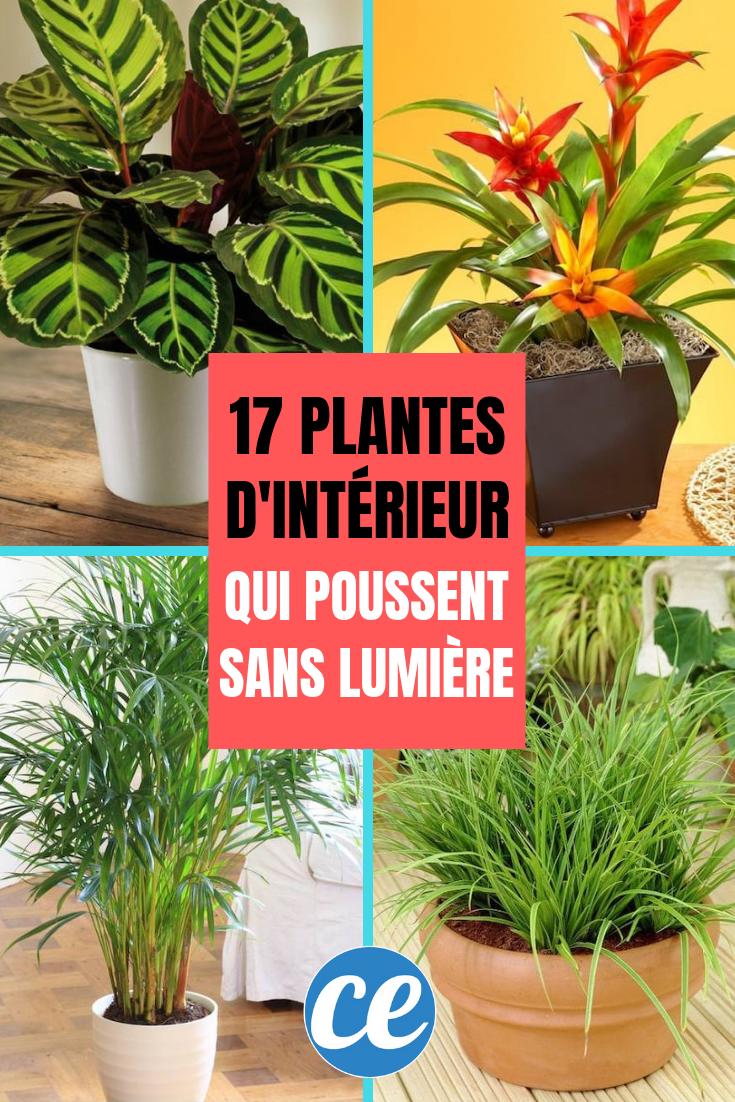 100 Fantastique Conseils Plante Exterieur En Pot Sans Soleil