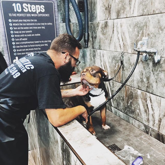 Kronos Is Like Daddy Do I Have To Take A Bath Don T Worry This Story Has A Happy Ending Kronos Got A Treat And Is Nice Pet Supermarket Dog Wash