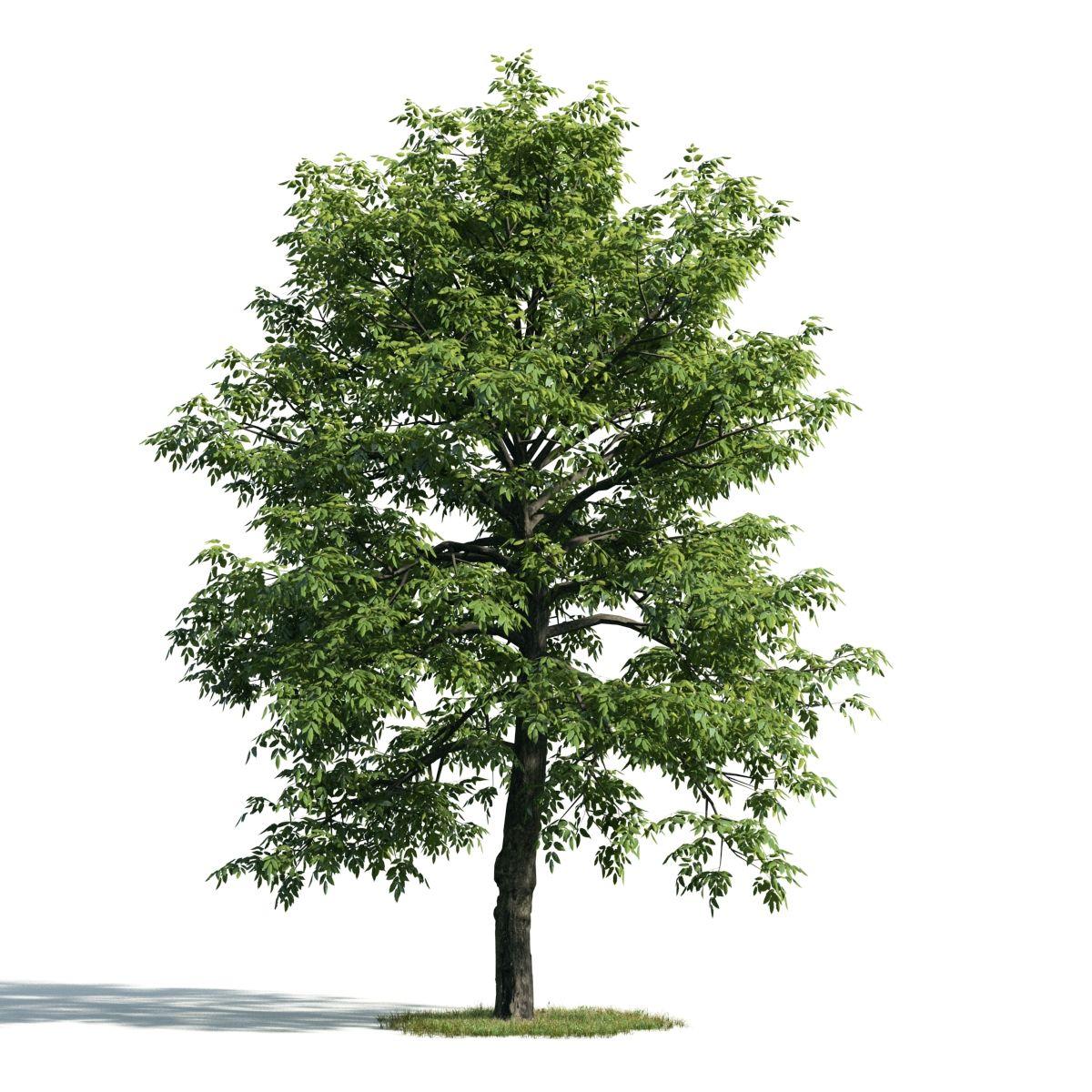 SKETCHUP] 3D TREE – VRAY READY | Bedroom design | 3d tree