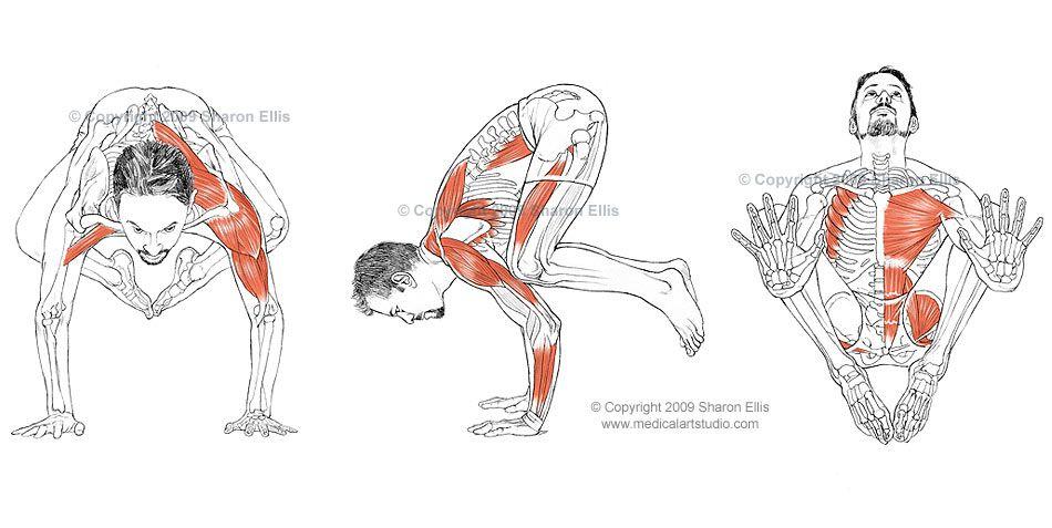 Pin By Pum Warinwitta On Yoga Anatomy Yoga Anatomy Yoga Yoga