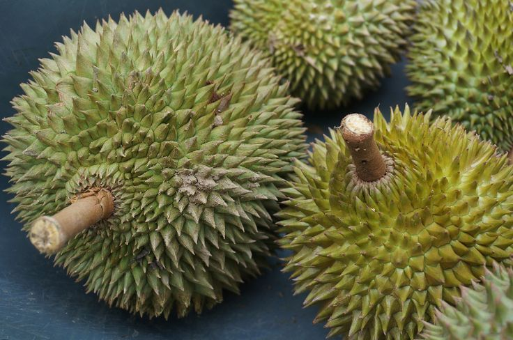 In Southeast Asia, you don't need to go looking for #durian. The powerful odour of this boulder-like #fruit will find you.