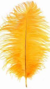 Pluma amarilla