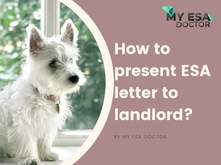 How to present ESA letter to a landlord? Emotional