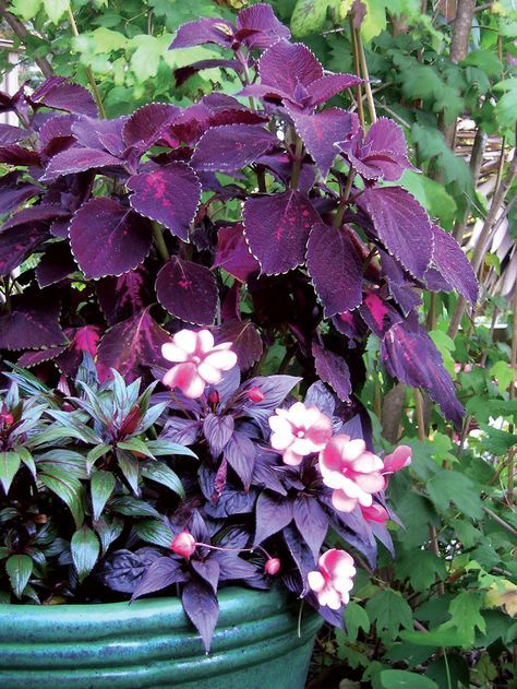 20 Best Shade Plants For Containers Sunset Magazine Container Gardening And Gardens