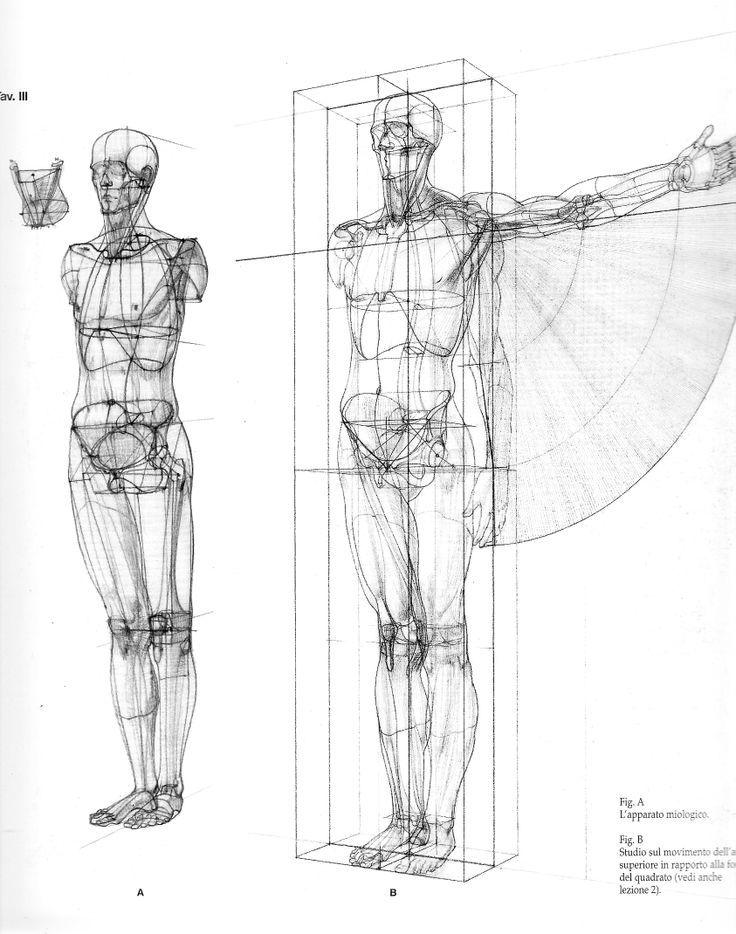Образы. Еженедельный мини конкурс | анатомия | Pinterest | Anatomy ...