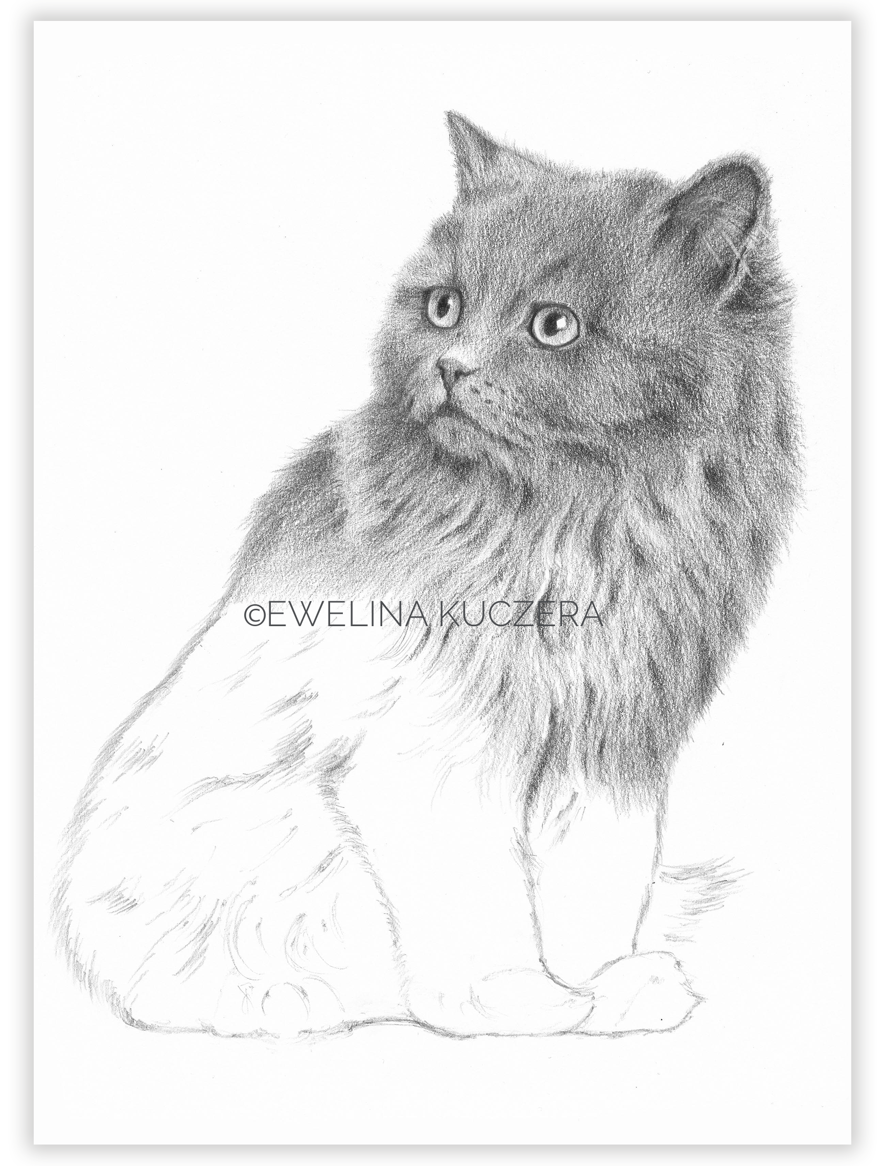 How To Draw A Cat Tutorial In 2020 Animal Sketches Drawings Art Blog