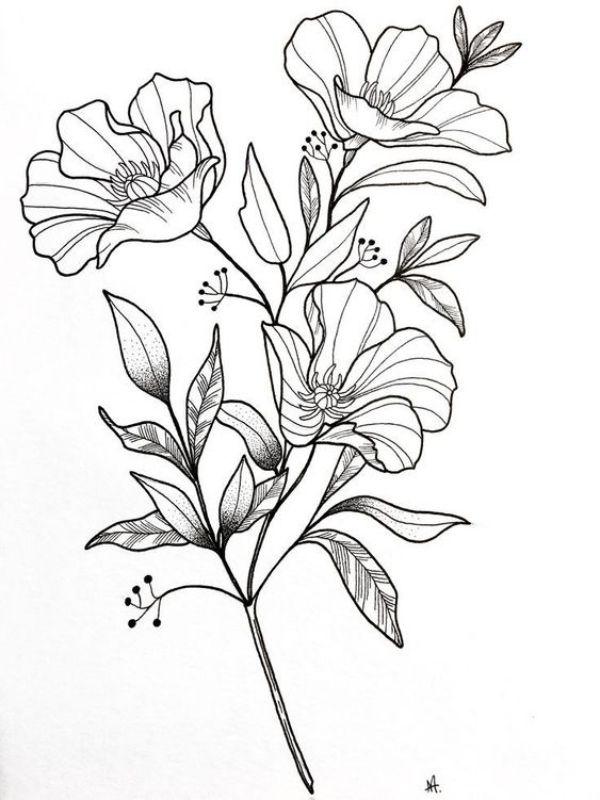 All Drawings Flower Drawings Flower Drawings Help You Appreciate