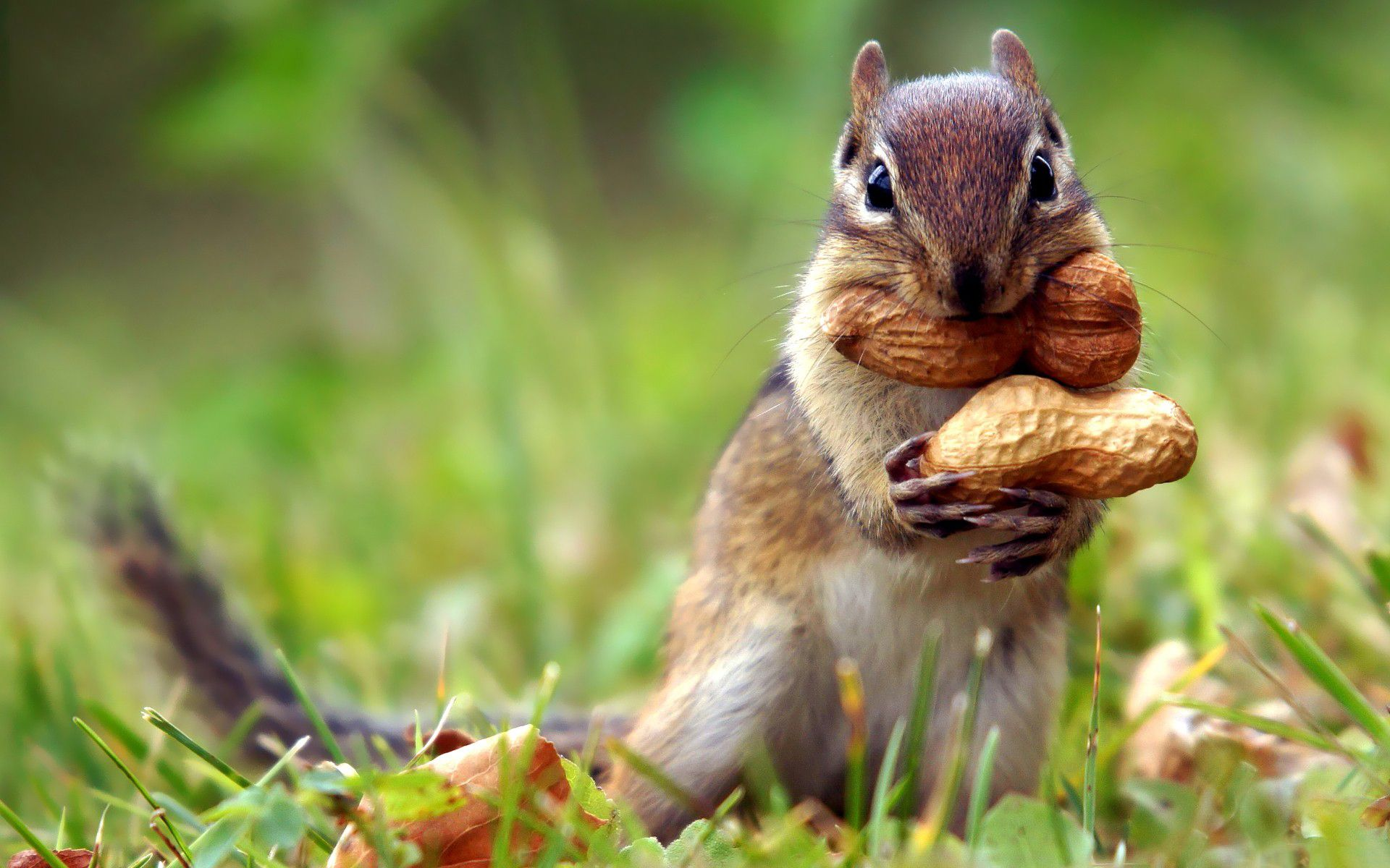 squirrel_112344494_77.jpg (1920×1200)