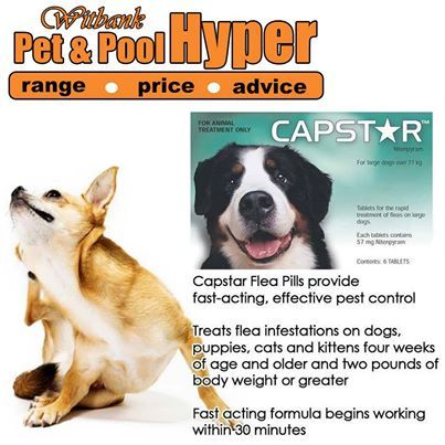 Your Large Dog Having Flea Problems Try Capstar Flea Tablets Available From Pet Pool Hyper Witbank Capstar Is A Fast Acting Knockdown Pets Large Dogs Fleas