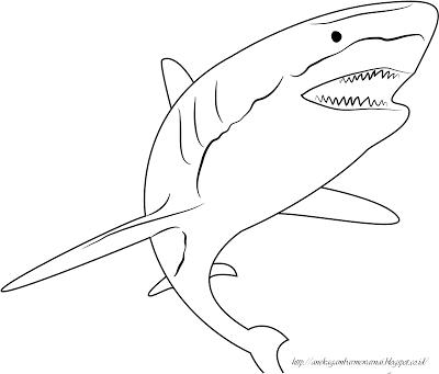 Aneka Gambar Mewarnai Gambar Mewarnai Ikan Hiu Untuk Anak Paud Dan