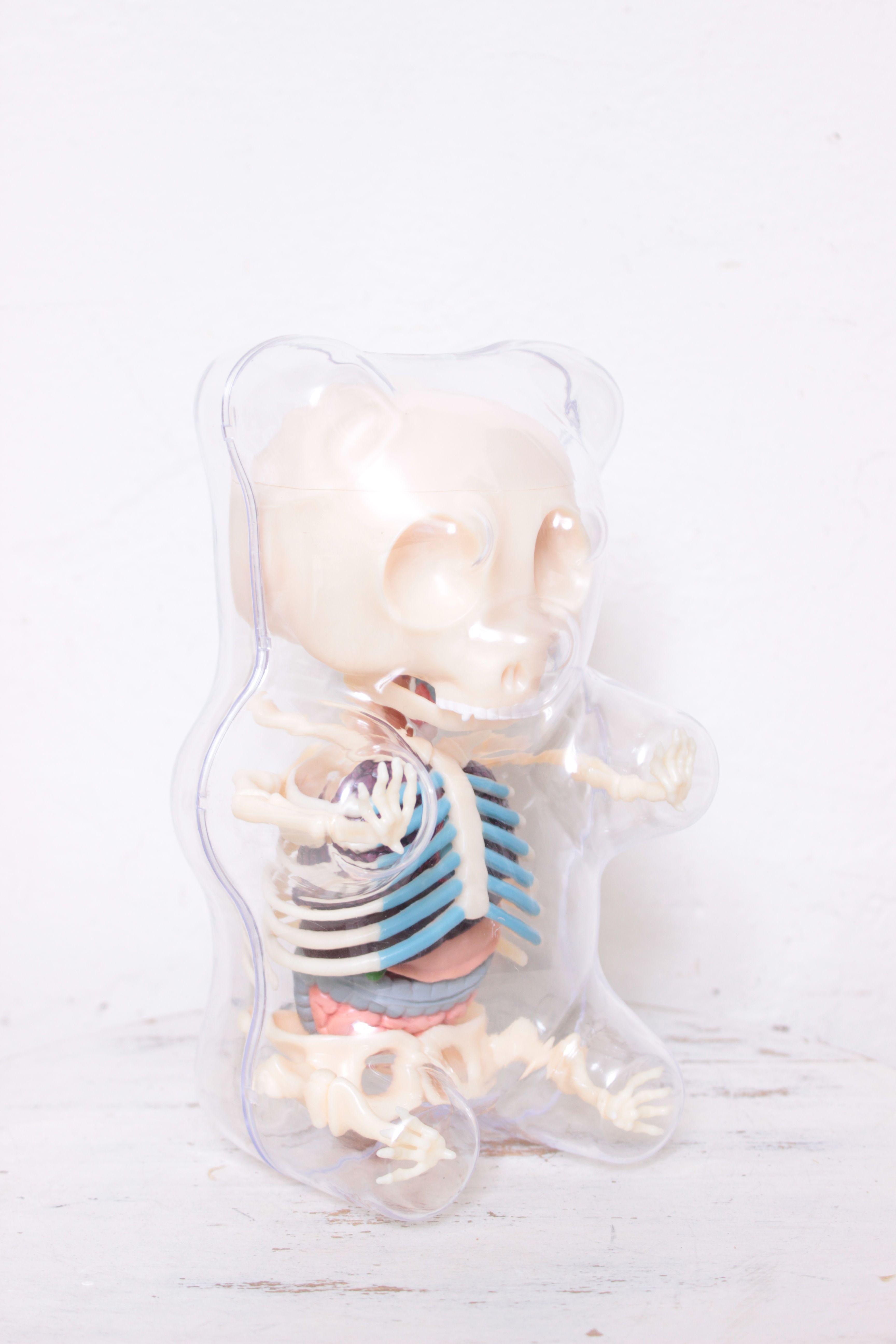 The clear gummy bear anatomy set!   Todo lo que me gusta   Pinterest ...