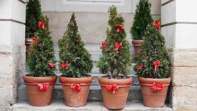 Weihnachtsbaum Im Topf Diese Regeln Mussen Sie Bei Der Pflege Beachten In 2020 Weihnachtsbaum Bepflanzung Tannenbaum Im Topf