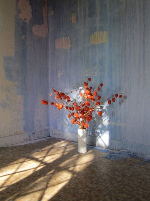 News Claire Decet Flowers Art Photography Art