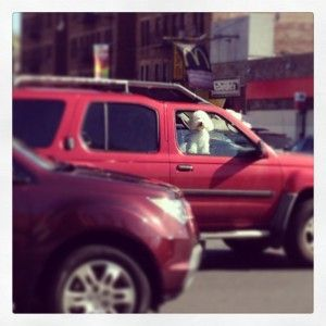 Cute Doggy in a car