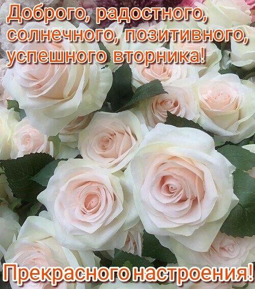 Пин от пользователя Евгения Федосеева на доске Доброе утро ...