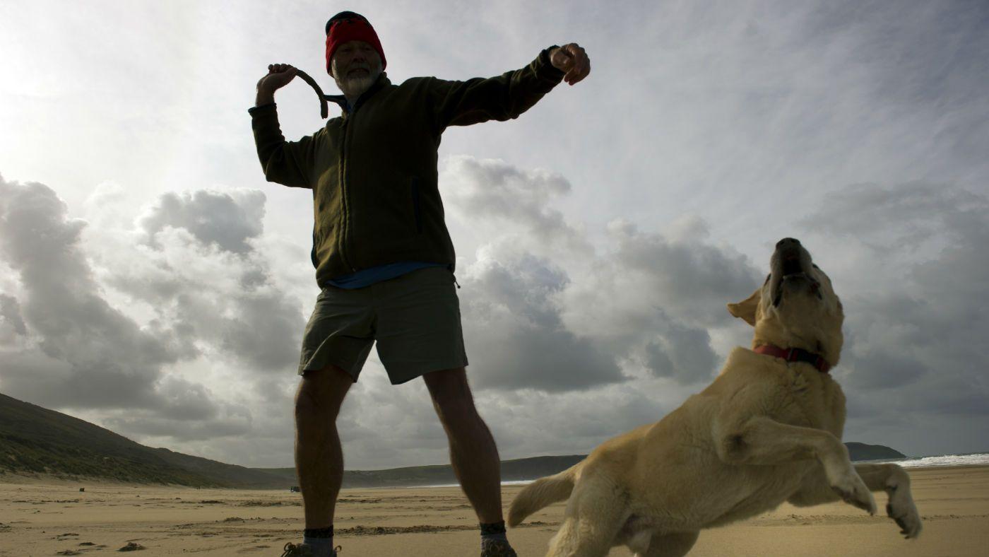 Dogfriendly walks in Devon a wide variety of locations