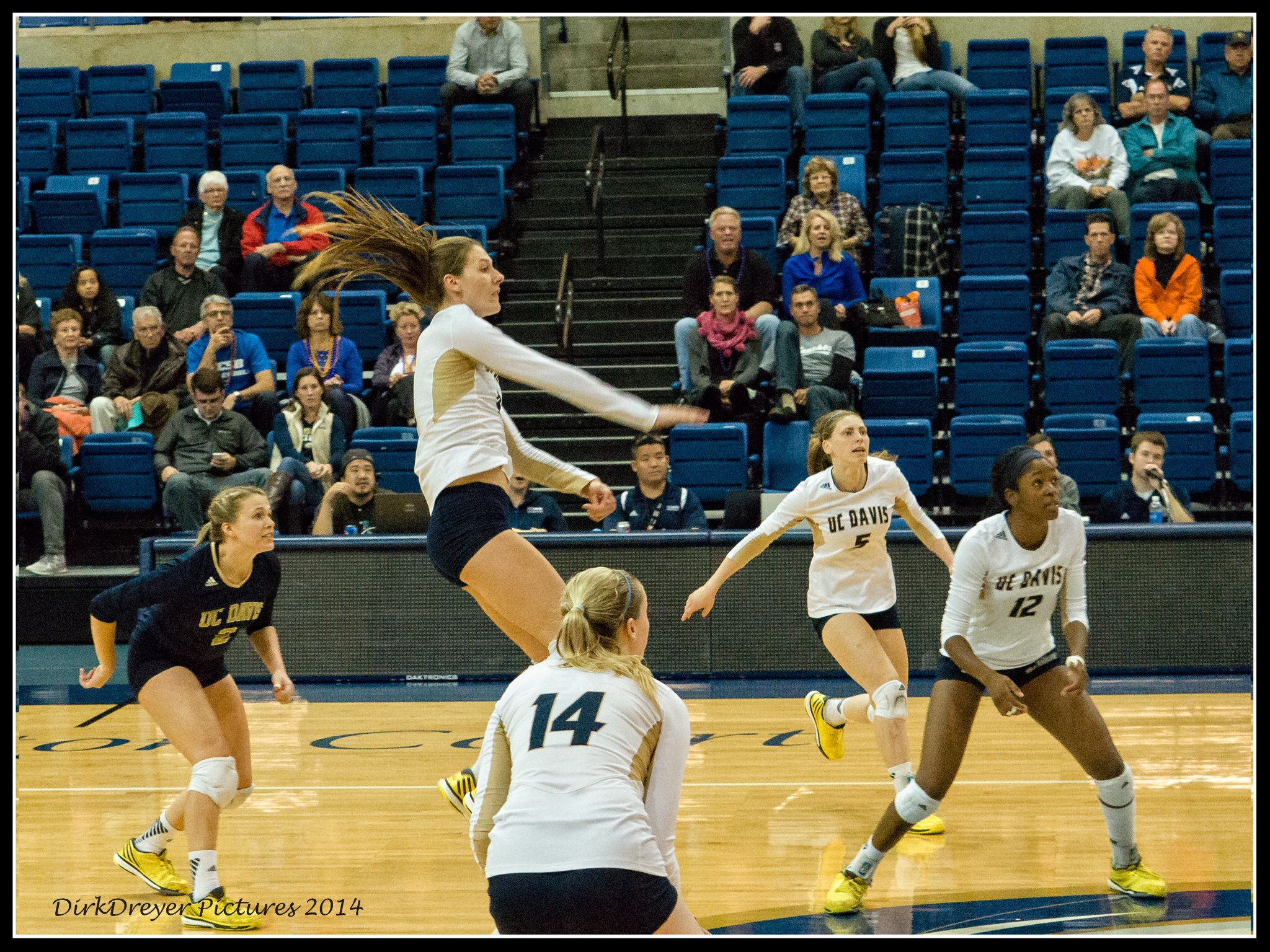 Uc Davis Woman S Volleyball Women Volleyball Volleyball Women