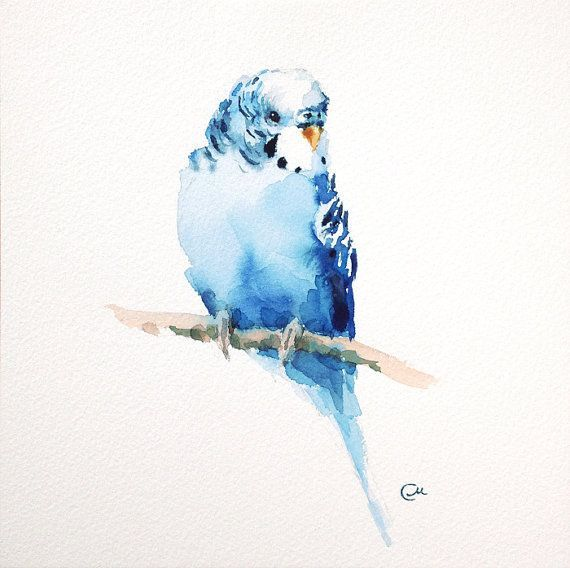Wellensittich-Sittich-ursprüngliches Aquarell-Blau durch CMwatercolors - #AquarellBlau #CMwatercolors #durch #WellensittichSittichursprüngliches #easywatercolorpaintings