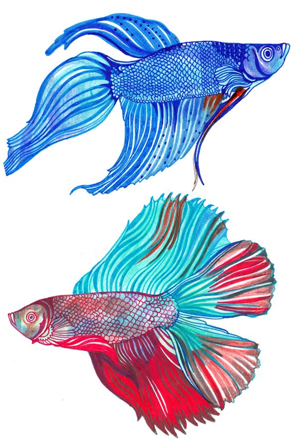 Fb Fish 3 Fish Drawings Fish Illustration Graphic Illustration