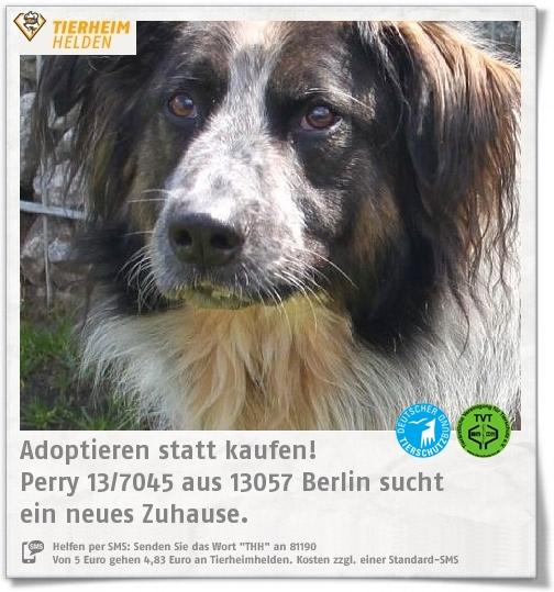 Perry kam durch eine Sicherstellung ins Tierheim Berlin