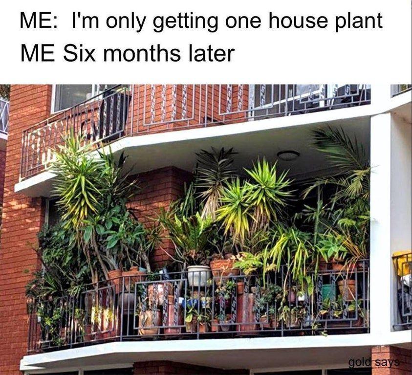 Anyone else? : plants