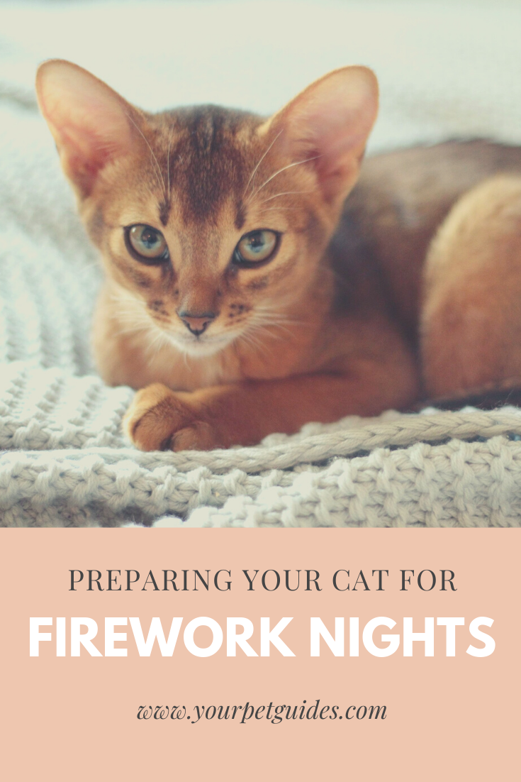 Preparing Your Cat For Fireworks In 2020 Cats American Animals Animal Shelter