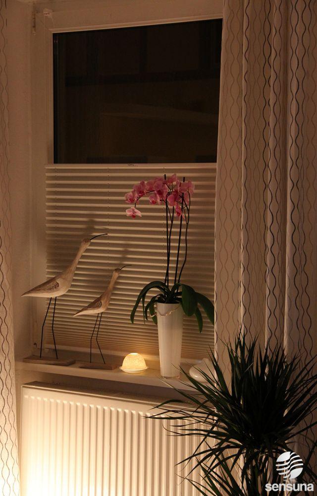 Plissees Zur Verdunkelung Des Raumes In Vielen Farben Und Designs Individuell Fertigbar Sensuna Wohn Fenster Dekor Fensterbank Dekorieren Fenstergestaltung