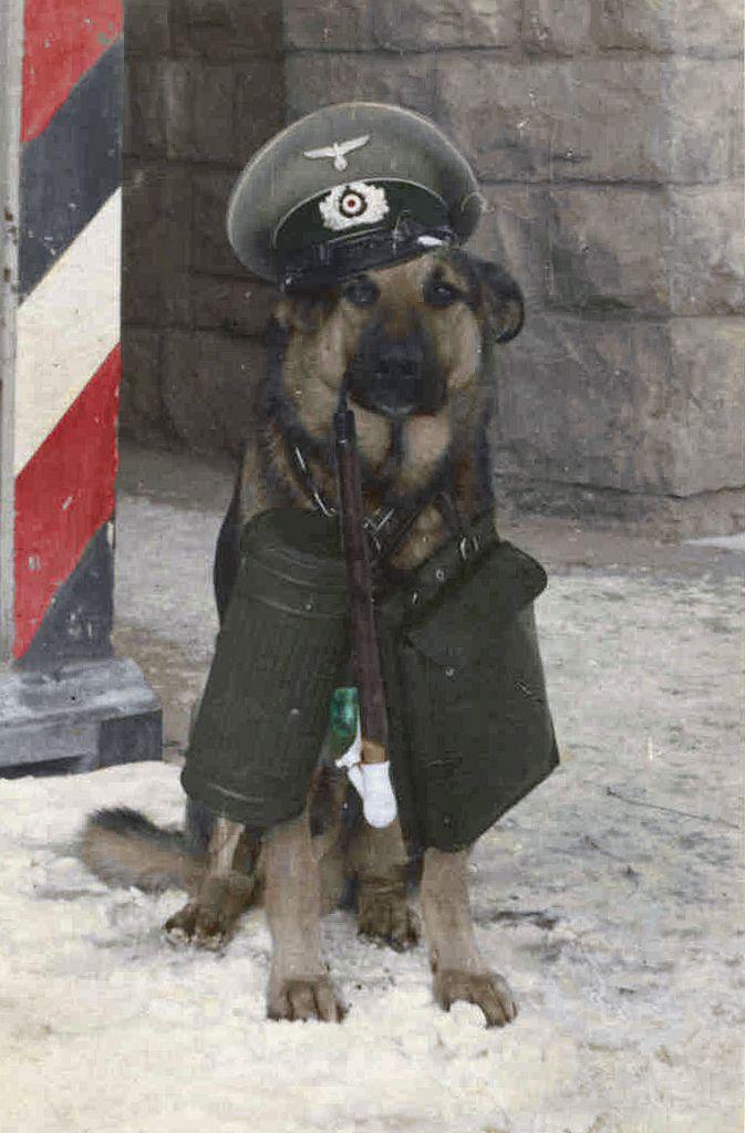 Dog officer.