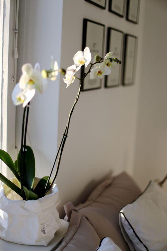 homevialaura | Gallery wall | #orchid #uashmama