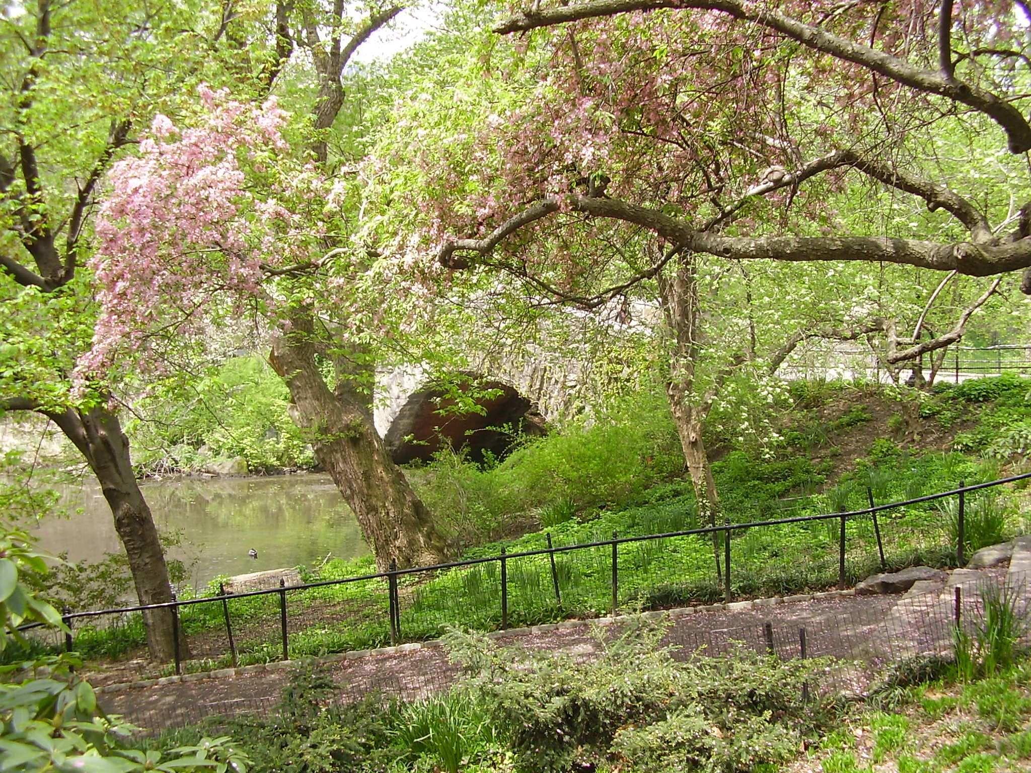 The Pond, Capstow Bridge | Central Park Photos by OWEINACHT