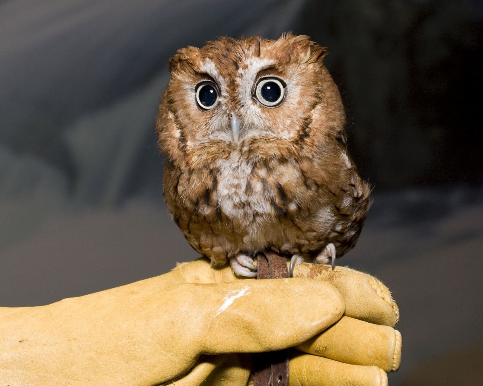 Er sucht sie owl