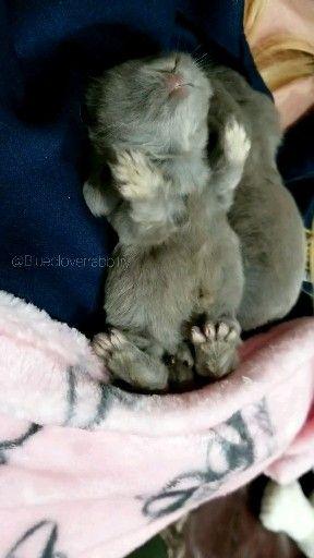 Baby Bunny Yawning #animalsandpets