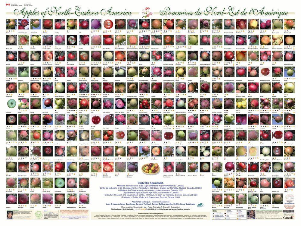 Apples of North Eastern America Apple varieties, Apple