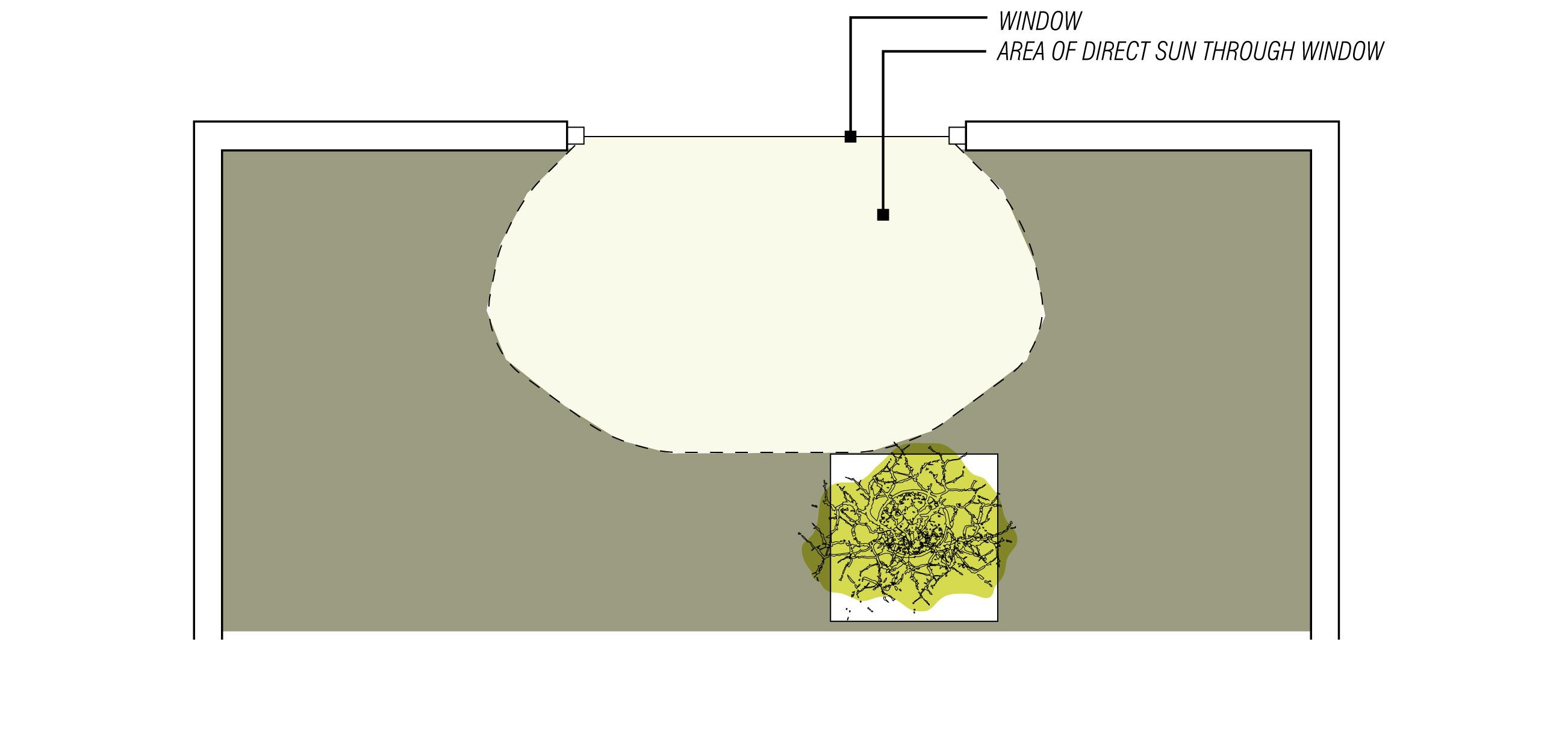 Diagram Of Bonsai Trusted Wiring Diagrams Tree Video Explaining A Good Position For Your Near Tools