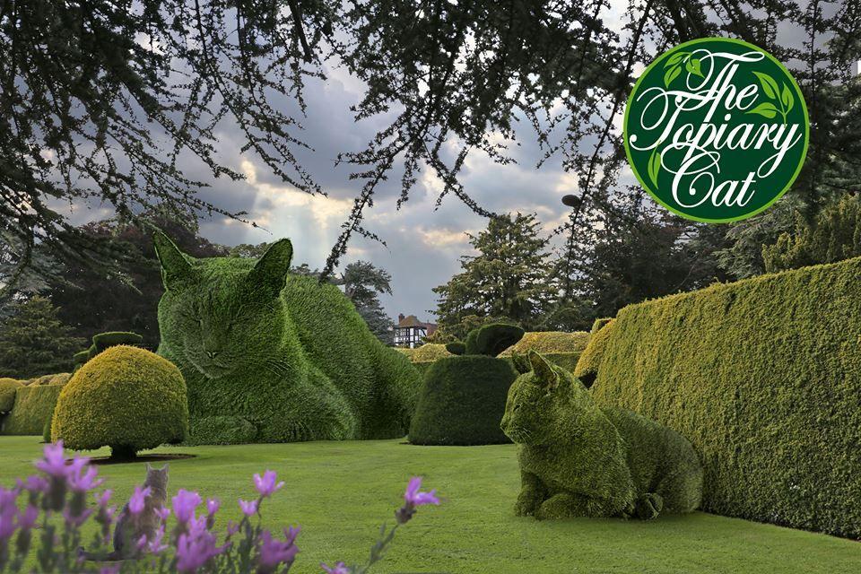 topiary cat with georgi ascott