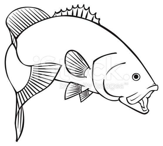 Black Line Illustration For A Smallmouth Bass Art Fish Drawings
