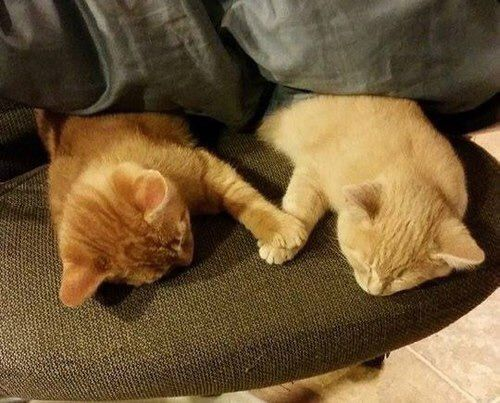We Heart It 経由の画像 https://weheartit.com/entry/173491270 #amazing #animals #beautiful #cat #cute #funny #love