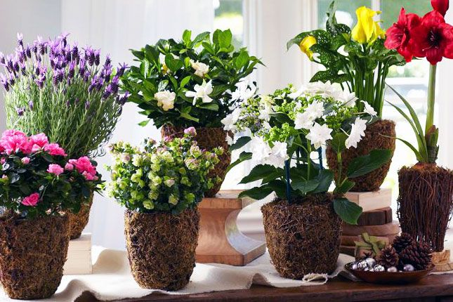 A Year Of Living Flowering Plants 10 Unconventional Takes On Clic Mother S Day Gifts