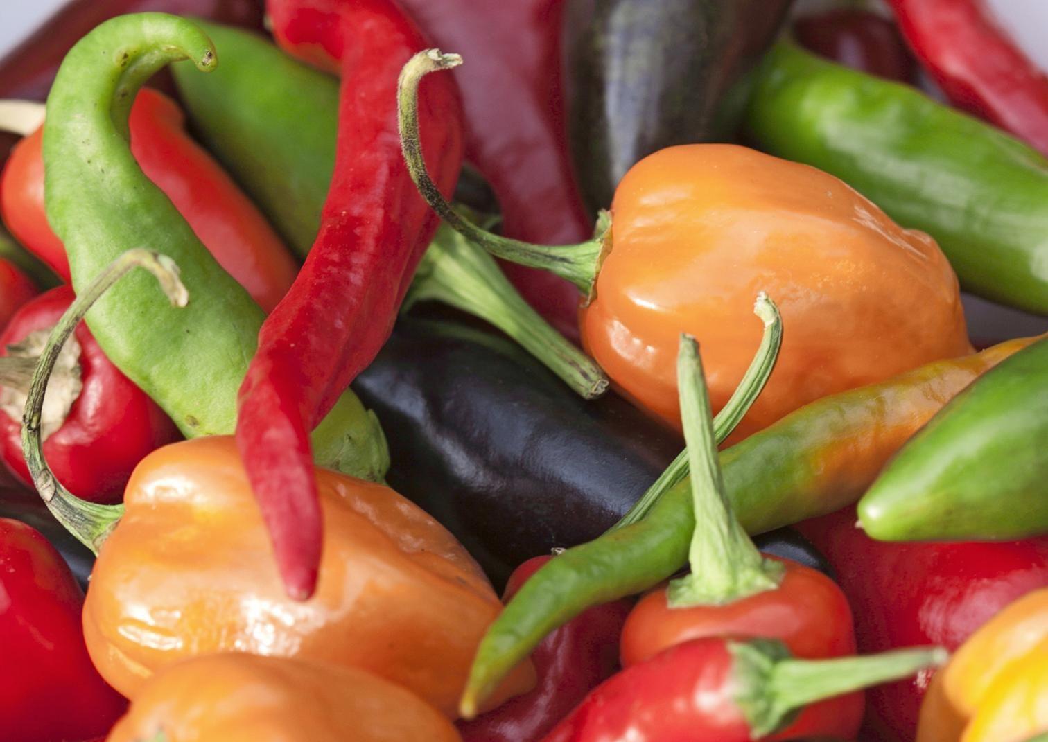 Paprikan ja chilin kasvatus onnistuu kasvihuoneessa, lasitetulla parvekkeella tai ikkunalaudalla. Lue Viherpihan vinkit ja kasvata lähiruokaa!