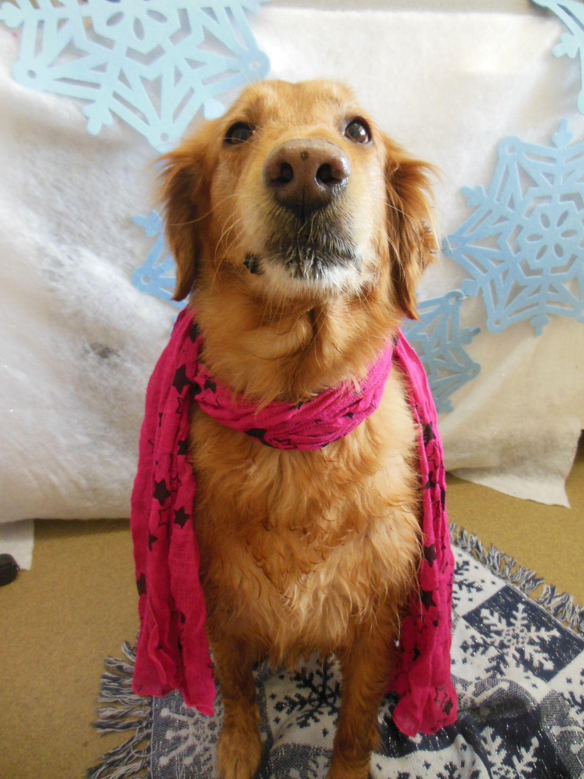 Pin By Pet Paradise Palm Coast On Wacky Wednesday Lily Pulitzer Golden Retriever Lily Pulitzer Dress