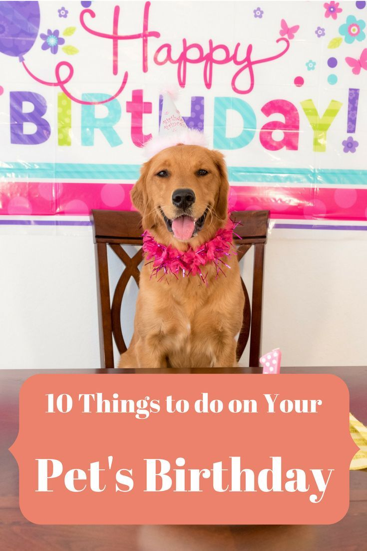 Pet Birthday Party Tips Celebrate Your Dog Cat Kitten Or Puppy S Special Day With These Fun Birthday Happy Birthday Dog Dog Birthday Gift Happy Birthday Fun