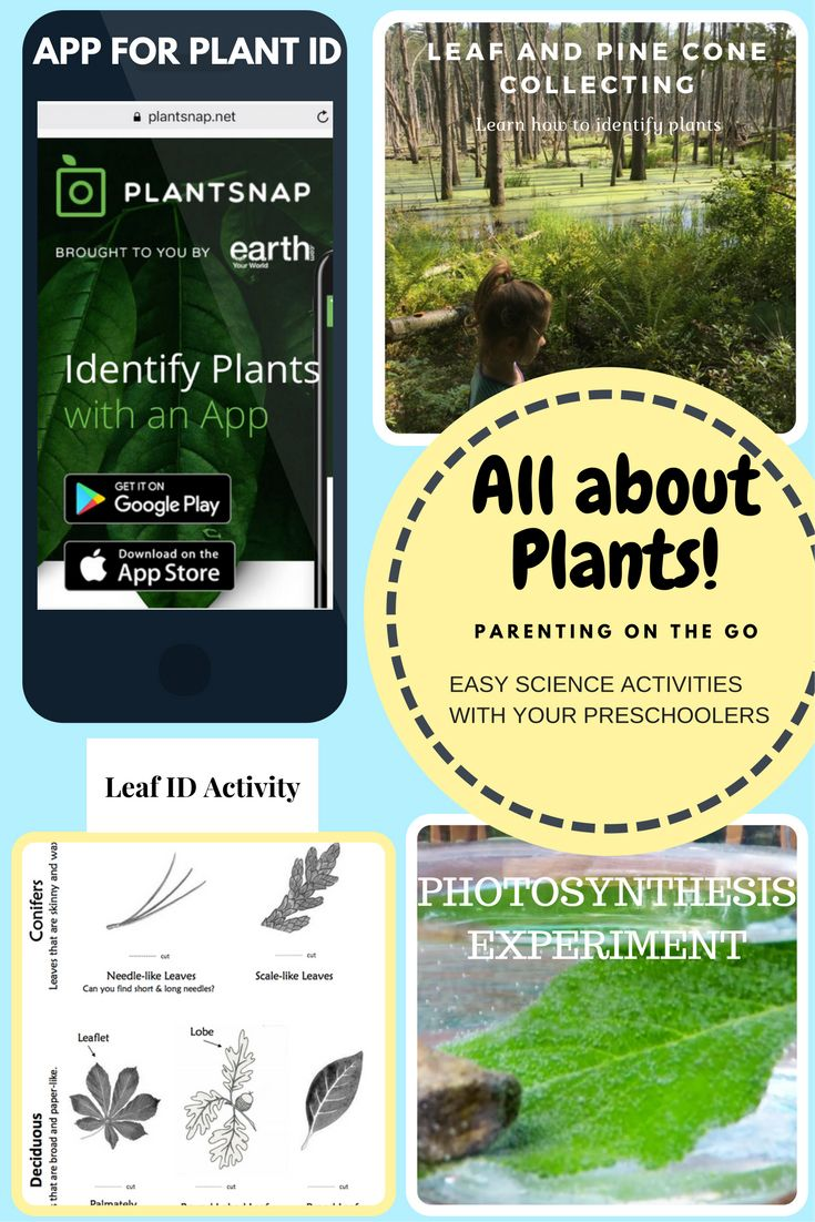 Follow the links to see an easy to use plant identification