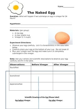 Egg Osmosis Lab Worksheet - worksheet