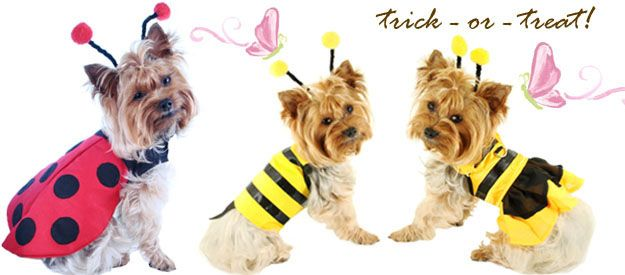 image detail for cute halloween costumes dogs pet puppy cat