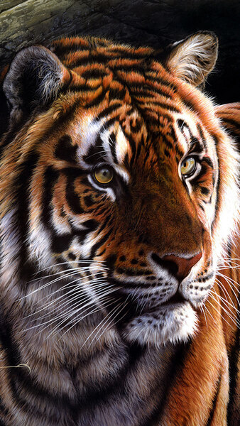 Tiger Art 4k Wallpaper 4 563 Animal Wallpaper Tiger Art Animals