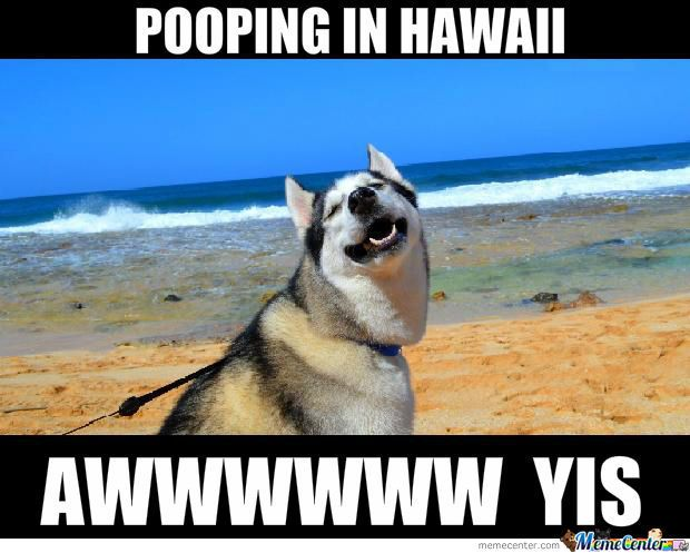 b1df8b7b855ba9e3c5fc110a849f7e77 in hawaii meme center, meme and humour