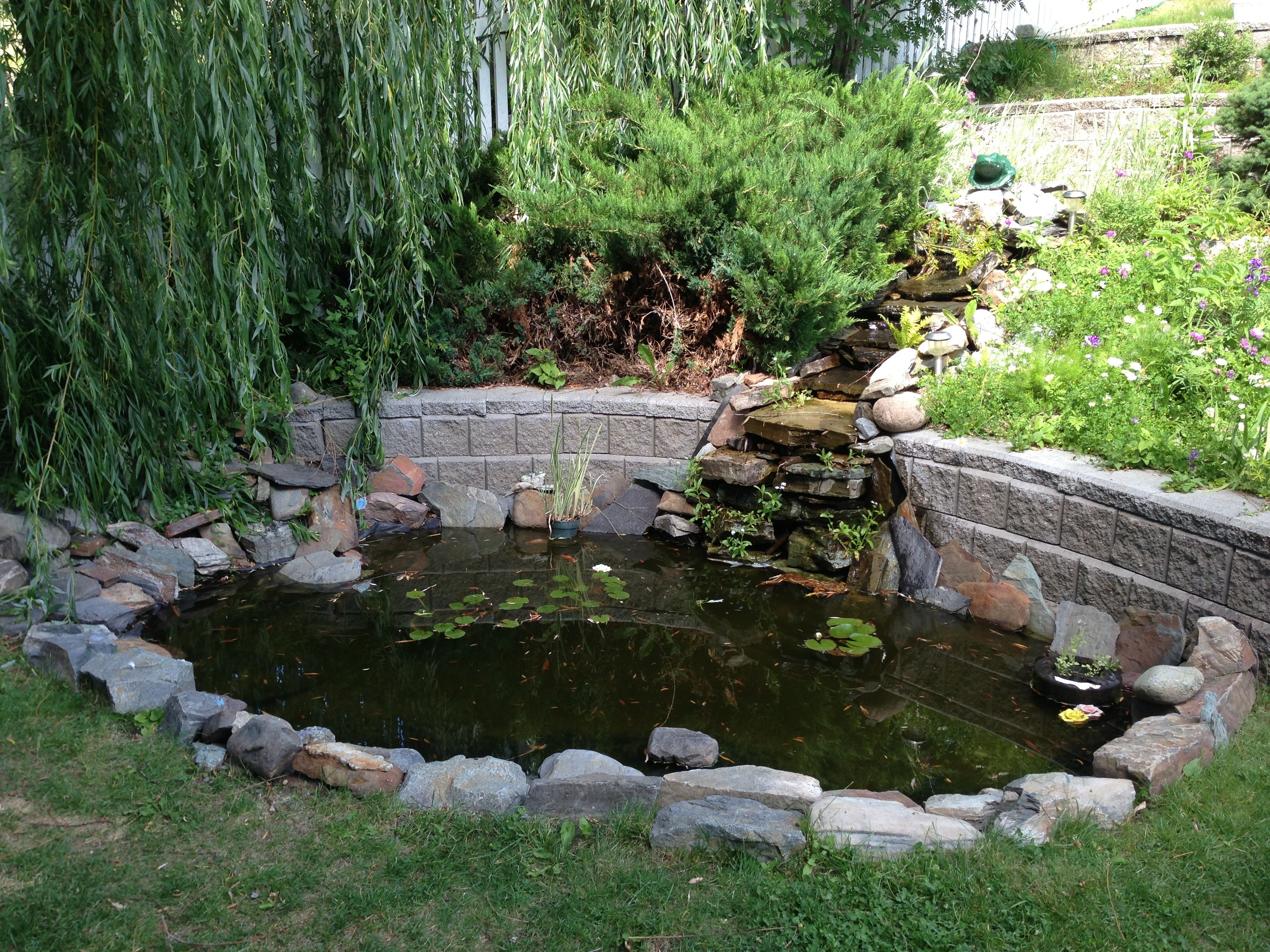 Small pond ponds pinterest for Small fish pond