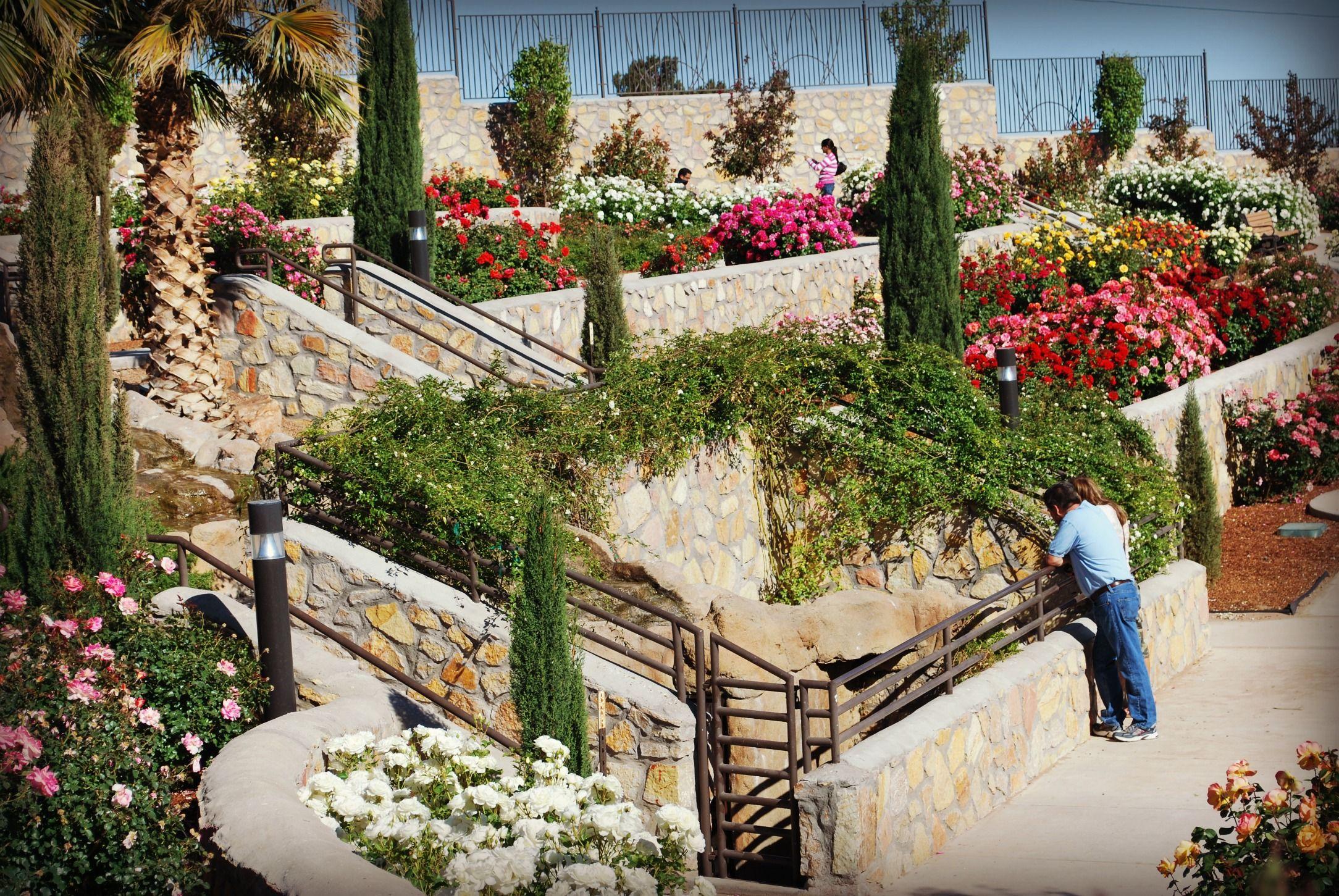 el paso rose garden in el paso tx - The Garden El Paso