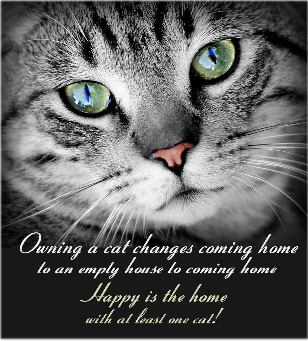 Free Image on Pixabay Cat, Animal, Animal Portrait, Pet