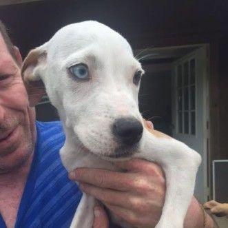 Dog Finder Adopt A Dog Or Cat Near You Dog Finder Dogs Dog Names